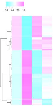 MEF2C KD David RANKL24h p0.01 heatmap ver2.png
